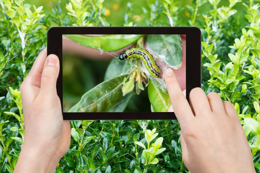agriculture automation